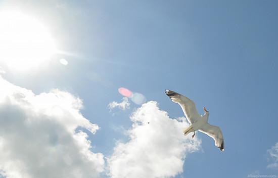 背景 壁纸 动物 风景 鸟 鸟类 天空 桌面 550_352