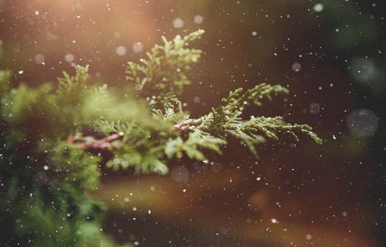 摄图网-绿色的植物.jpg