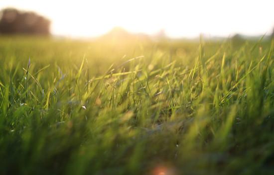 摄图网-绿草地.jpg