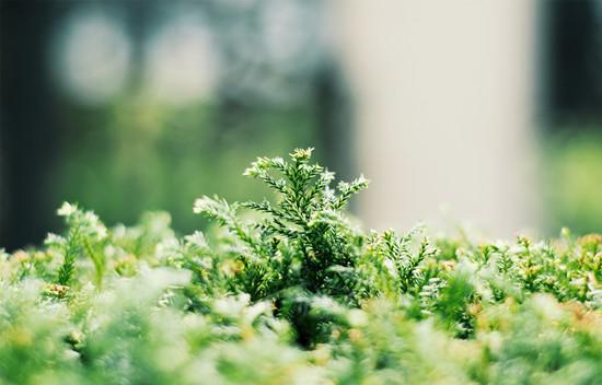 摄图网-清新的绿色植物 (1).jpg